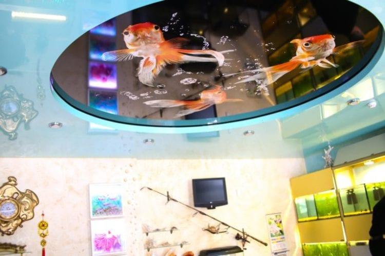 Натяжной потолок с фотопечатью рыбы
