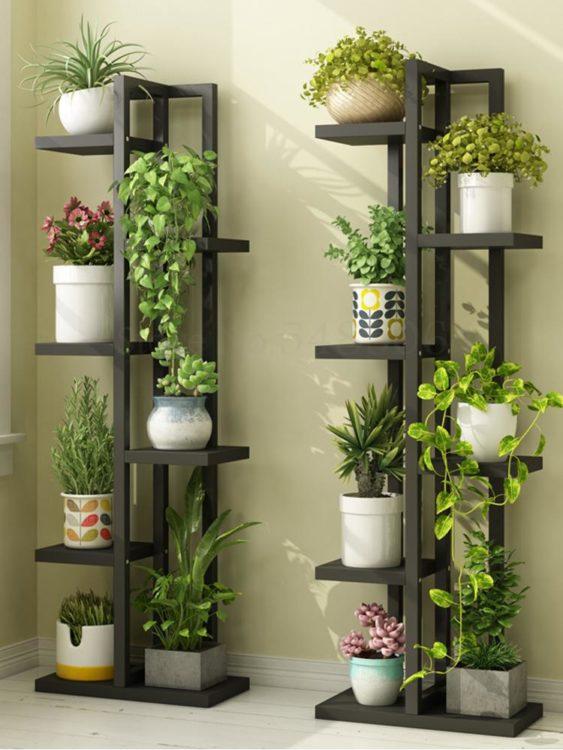 стеллаж с комнатными растениями